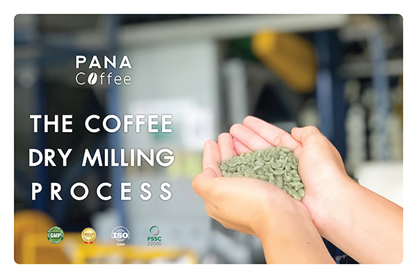 การสีกาแฟกะลาและคัดคุณภาพกาแฟสาร